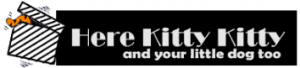 here-kittykitty.com